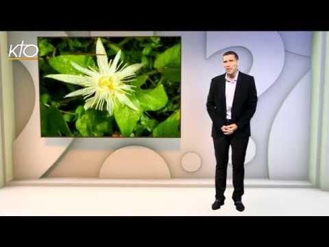 Pourquoi appelle-t-on une fleur La Passiflore ?