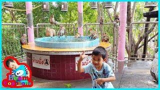 น้องบีม | ดูลิงเล่นน้ำ เที่ยวราชบุรี วัดหนองหอย
