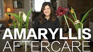 Amaryllis Done Blooming? Here's What to Do // Garden Answer