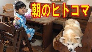 朝の秋田犬・シェパード犬・通学・通園前の一コマ