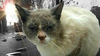 НЕСЧАСТНЫЙ кот заглядывал в глаза прохожим и мяукал прося о помощи, но его не замечали...