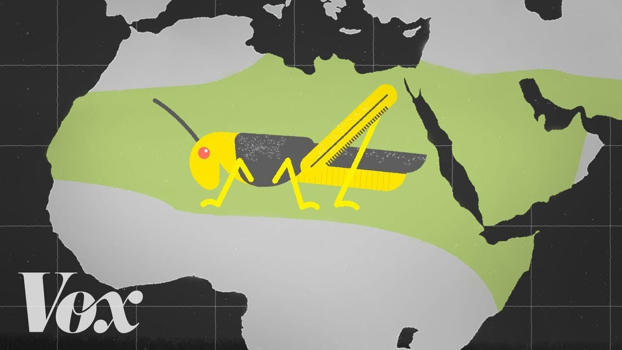 Why locusts are descending on East Africa thumbnail
