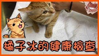 【巧克力】『橘子冰的日常』- 健康檢查記 ฅ•ω•ฅ