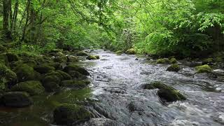 A Short Meditation of Nature Sounds W/O Birdsong-Calming Sound of Water Relaxation