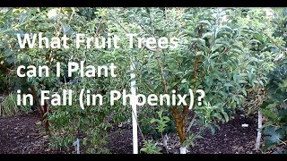 What Fruit Trees Can I Plant In Fall In Phoenix?
