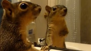 Animals React To Their Reflections   Funny Animals Vs Mirrors Compilation