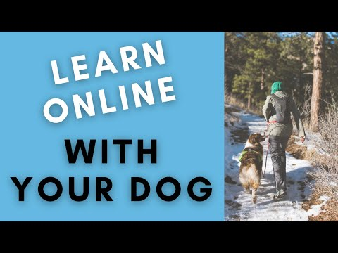 Online Dog Training Classes You & Your Dog will Love! - YouTube