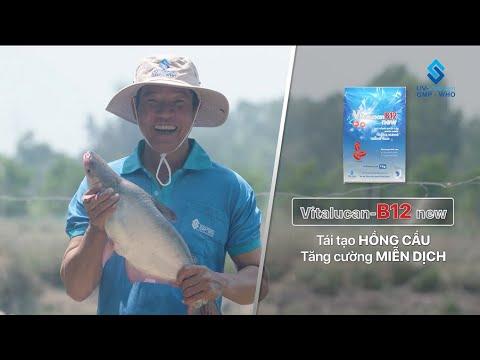 VITALUCAN-B12 new - Tái Tạo Hồng Cầu, Tăng Cường Miễn Dịch Cho Cá
