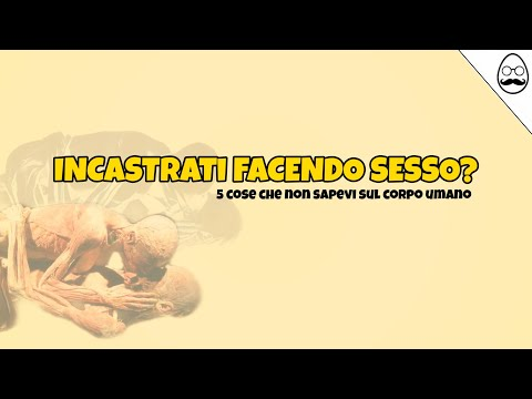 Video del gatto di sesso