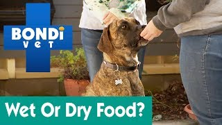 How Much Wet And Dry Food For A Dog?   Ask Bondi Vet