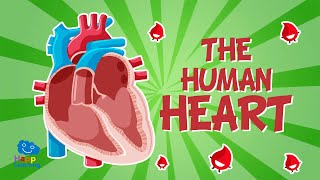 The Human Body: The Heart | Educational Videos For Kids