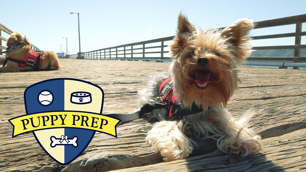 The Puppies Go To The Beach thumbnail