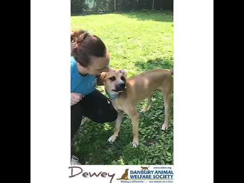 DOG OF THE MONTH!, an adoptable Hound Mix in Danbury, CT_image-1