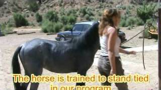 Mustang Training at the Largo Canyon School