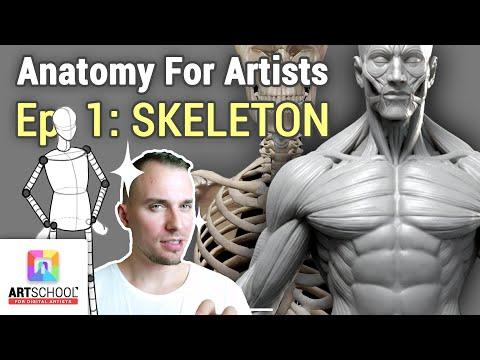 🎓 ANATOMY FOR ARTISTS - SKELETON 101