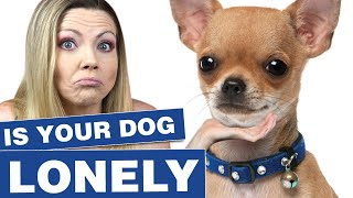 Does my dog need a companion dog? | Sweetie Pie Pets