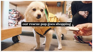 Our Rescue Pup Goes Shopping   WahlieTV EP741