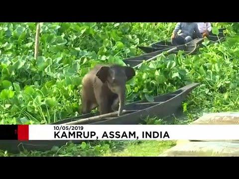 العرب اليوم - إنقاذ صغير فيل من الغرق داخل بحيرة في الهند
