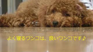 動画サムネイル:平成26年9月 子犬コースを開催しました!!
