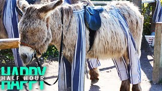Donkeys Wear PANTS And It's ADORABLE