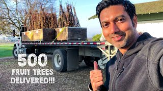 500 Fruit Trees Have Been Delivered