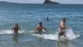 Swimmers run from water as killer whale swims towards shore