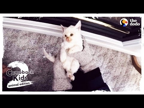 Frozen Kitten Brought Back To Life by Family UPDATE | The Dodo Comeback Kids S02E04