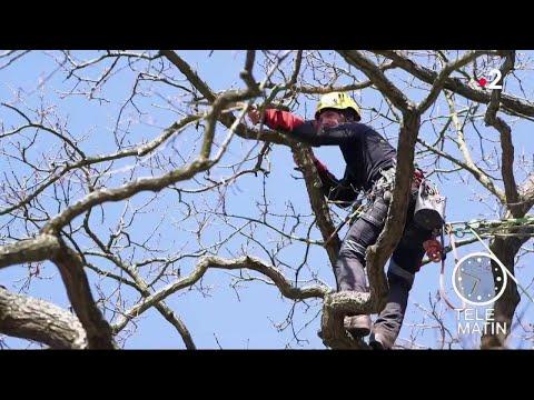 Jardin - Savez-vous tailler vos arbres ?
