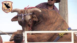 !!Martinez Ranch La #1de Texas¡¡ llega al Sheriffs Posse Grounds Salinas CA.2019
