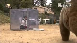 Японское шоу - борьба медведя с человеком / Japanese show - fight with a bear