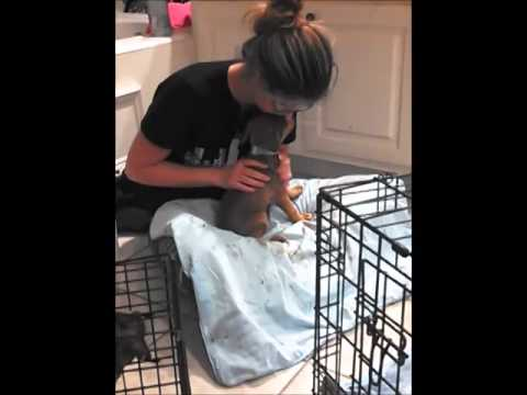 Video 9 PARVO PUPS - HOME TREATMENT