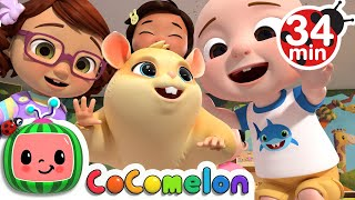 Class Pet Song + More Nursery Rhymes & Kids Songs - CoComelon