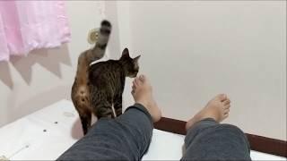 แผนหลอกแมวเข้าบ้าน