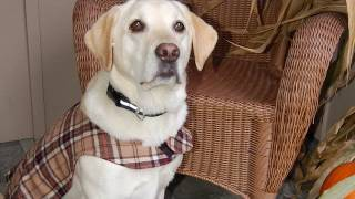 How To Make A Custom Dog Vest (in HD)