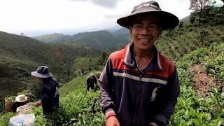 Thưởng thức giọng hát núi rừng Tây Nguyên - Hương vị đồng quê - Bến Tre - Miền Tây