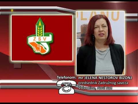FONO:  mr Jelena Nestorov Bizonj - Nastup zadrugara na Sajmu
