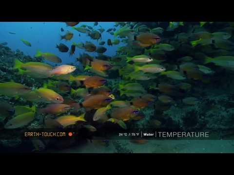 أفلام الطبيعة HD …أسماك ملونة
