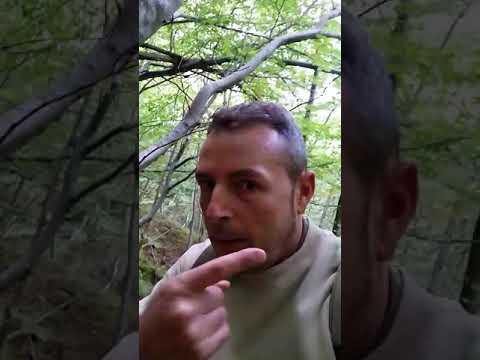 Primi segni di apparizione di una posizione di fungo