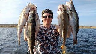 Волгоградский рыболовный форум волга дон мамба