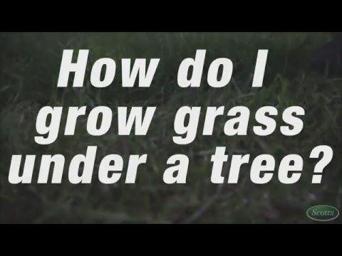 Growing Grass Under A Tree | Scotts Mp3