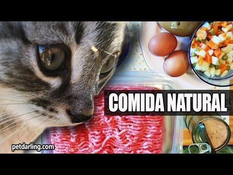 COMIDA CASERA PARA GATOS ★ PetDarling Recetas 1