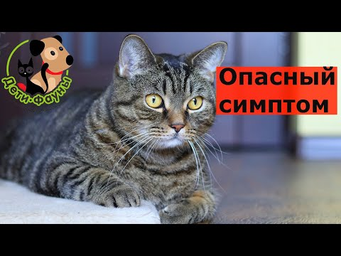 Кошка заболела, опасные симптомы, когда нужно срочно к доктору