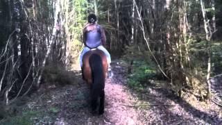 Donkeyboy - Crazy Something Normal
