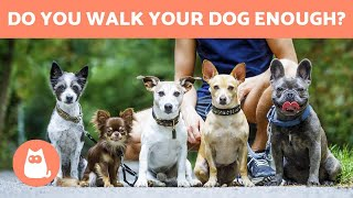 How Often Should You WALK YOUR DOG - Daily Exercise Tips