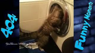 Смешные коты Смешное видео Приколы с котами и кошками Попробуй не смеяться