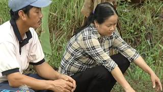 Ký Sự Dừa: Tập 12   Ngọt Say Mật Hoa Dừa