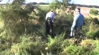 Attack on Invasive Plants