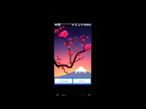 Video of Lovely Red Sakura Live WP+