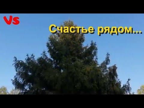 Молитва Матроне Московской. Помощь, лечение и счастье.