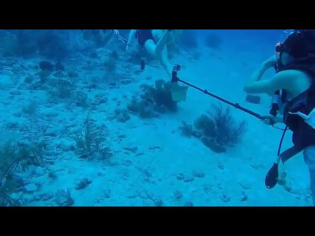 Casuarina Point Reef Dive Grand Cayman
